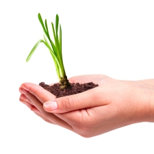 shutterstock_160565801-new-growth-hands-with-plant
